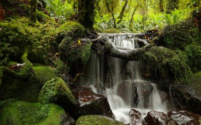 Trickling Rain in Te Anau and Meandering Around In Milford Sound